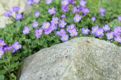 Belles petites fleurs pourpres Photos stock