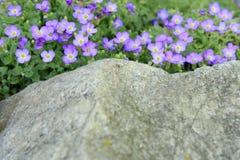 Belles petites fleurs pourpres Photo libre de droits
