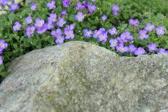 Belles petites fleurs pourpres Photo stock