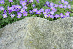 Belles petites fleurs pourpres Images libres de droits