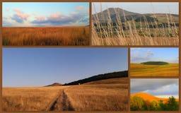 Belles photos des champs, écosystèmes d'herbe, Images stock