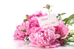 Belles pivoines de floraison Photographie stock libre de droits
