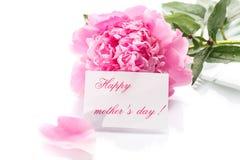 Belles pivoines de floraison Photo stock