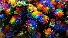Belles pivoines multicolores int?ressantes peu communes d'arc-en-ciel, marguerites, roses S?lection des fleurs, couleur peu commu banque de vidéos