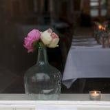 Belles pivoines roses et jaunes Photographie stock