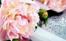 Belles pivoines sur un fond blanc avec le foyer mou Image stock