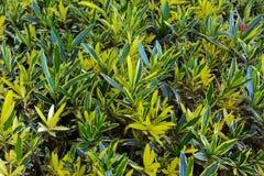 Belles plantations tropicales à feuilles persistantes en Egypte Dans la catégorie du fond créatif des vacances d'été exotiques images libres de droits