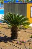Belles plantations tropicales à feuilles persistantes en Egypte Dans la catégorie du fond créatif des vacances d'été exotiques photos stock