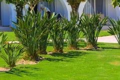 Belles plantations tropicales à feuilles persistantes en Egypte Dans la catégorie du fond créatif des vacances d'été exotiques image libre de droits