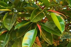 Belles plantations tropicales à feuilles persistantes en Egypte Dans la catégorie du fond créatif des vacances d'été exotiques photos libres de droits