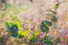 Belles plantes vertes au coucher du soleil en été sur le fond bleu Photos stock