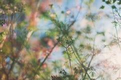 Belles plantes vertes au coucher du soleil en été sur le fond bleu Image libre de droits