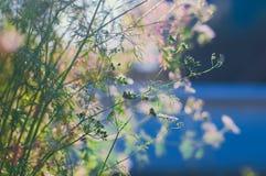 Belles plantes vertes au coucher du soleil en été sur le fond bleu Photos libres de droits
