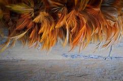Belles plumes de couleur d'ornement Images libres de droits