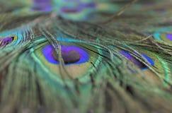Belles plumes de paon Fermez-vous vers le haut du fond vert et bleu de tache floue Macro modèle defocused Photographie stock
