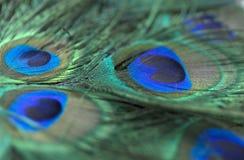 Belles plumes de paon Fermez-vous vers le haut du fond vert et bleu de tache floue Macro modèle defocused Photo stock