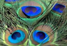 Belles plumes de paon Fermez-vous vers le haut du fond vert et bleu de tache floue Macro modèle defocused Image stock