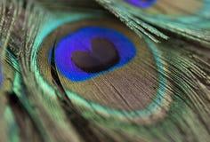 Belles plumes de paon Fermez-vous vers le haut du fond vert et bleu de tache floue Macro modèle defocused Photos libres de droits