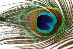 Belles plumes de paon sur le fond blanc Photo libre de droits