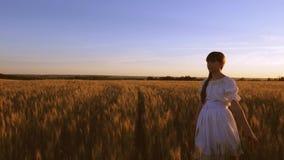 Belles promenades de fille à travers le champ avec du blé d'or dans la lueur et le smill de coucher du soleil Mouvement lent banque de vidéos