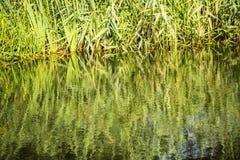 Belles réflexions sur le canal de Chichester dans le Sussex occidental, Angleterre image stock