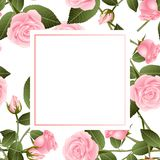 Belles Rose - Rosa Banner Card roses Jour de Valentine Illustration de vecteur Illustration de Vecteur