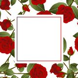 Belles Rose rouge - Rosa Banner Card Jour de Valentine Illustration de vecteur Illustration Stock