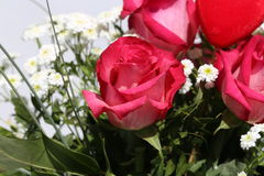 Belles roses Photo libre de droits