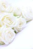 Belles roses blanches Photographie stock libre de droits