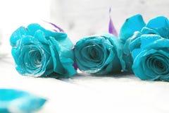 Belles roses bleues Images libres de droits