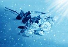 Belles roses dans le clair de lune Photos stock