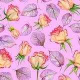Belles roses et feuilles beiges et rouges de pourpre sur le fond rose Configuration florale sans joint Peinture d'aquarelle Photographie stock libre de droits