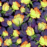 Belles roses et feuilles jaunes et rouges de pourpre sur le fond noir Configuration florale sans joint Peinture d'aquarelle Image stock