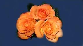 Belles roses oranges de bouquet Photos libres de droits