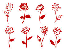 Belles roses rouges Photos stock