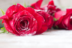 Belles roses rouges Photo libre de droits