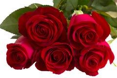 Belles roses rouges sur un fond blanc Photo stock