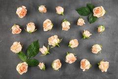 Belles roses sur le fond gris, Images libres de droits