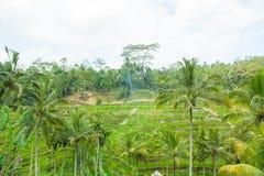 Belles terrasses de riz Image stock