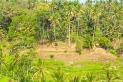 Belles terrasses de riz Photo libre de droits