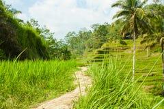 Belles terrasses de riz Photographie stock libre de droits