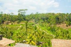 Belles terrasses de riz Images stock