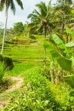 Belles terrasses de riz Photos libres de droits