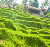 Belles terrasses de riz Images libres de droits