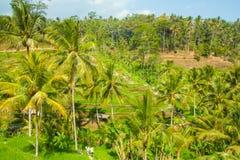 Belles terrasses de riz Photos stock