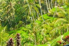 Belles terrasses de riz Photographie stock