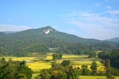 Belles terrasses de riz en Thaïlande Photos libres de droits