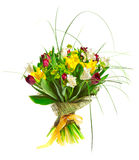 Belles tulipes Images libres de droits