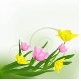 Belles tulipes. Image libre de droits