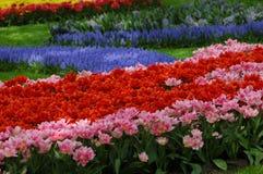 Belles tulipes dans Keukenhof, Hollande Photographie stock